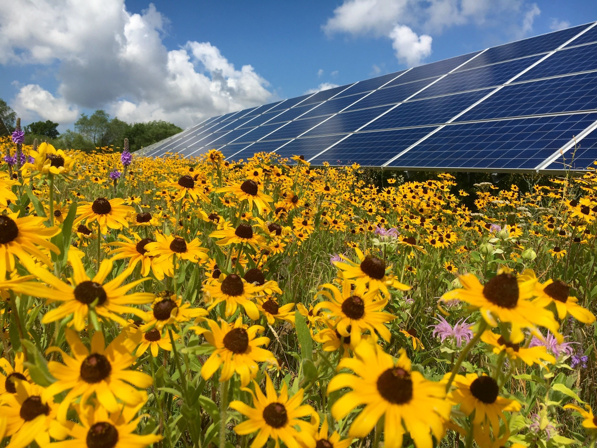 Pollinator habitats: The bees' knees of rural solar development